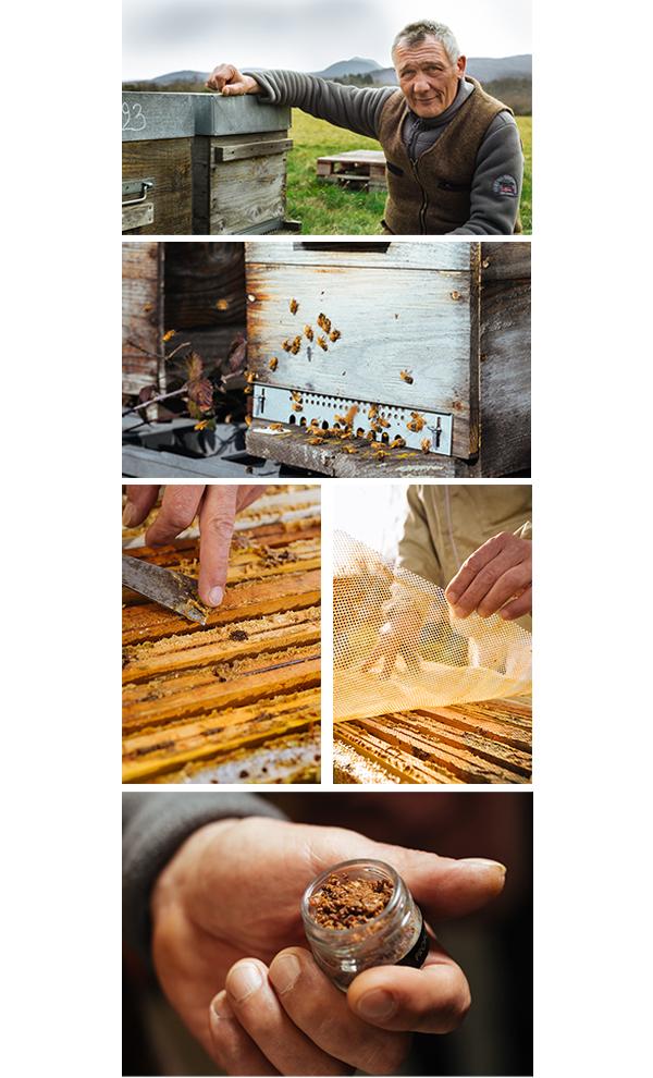 colheita propolis